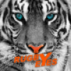 tipster Eyes.of.Rugby