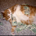 Betting tip from football tipster Fat Cat