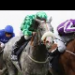 Betting tip from horse racing tipster Joe Marshall