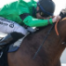 Betting tip from horse racing tipster Riley Anderson